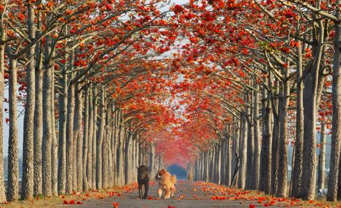 全球最美花道 台灣白河上榜