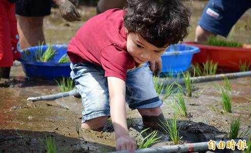 農不捨田荒蕪 供童體驗農樂
