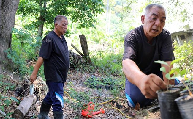 每天種樹抗伐木 他20年復育百公頃森林
