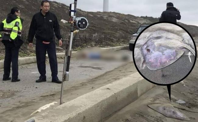 男釣客倒臥海邊 疑遭魟魚刺死