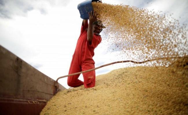 貿易戰休兵首次 中買50萬噸美大豆