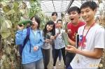 溫室栽種延產期 將軍胡瓜受歡迎