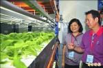 花蓮高農自動化種菜 生長快1.5倍
