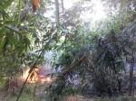 男子自刺雙眼 竹林內縱火嚴重燒傷