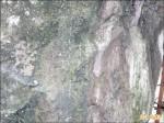 琉璃光之橋休園 遊客擅闖還刻字