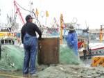鳳凰颱風逼近 台中港漁市場業績掉五成