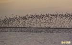 觀鳥馬拉松大賽 吸引8國鳥友報名