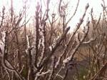 宜蘭太平山 23日恢復開園
