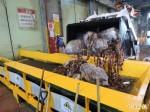 台中市銷毀染餿油產品33公噸