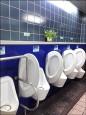 市府大樓修4間廁所 砸1077萬