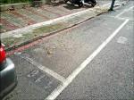《爭議停車格 警方不執法》紅線白框停車格 駕駛人傻眼