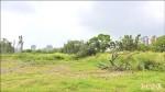 樹枯雜草長 公園像荒地
