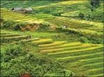 〈旅遊的滋味〉越南沙霸梯田風光