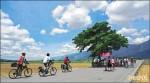 金城武樹+稻田美景 池上觀光產值7億