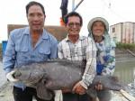 2014永安石斑魚文化節4日登場
