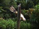 候鳥遷徙少 恆春首破伯勞盜獵