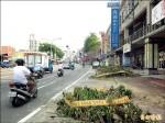 「台南怎麼了」 北安路5棵樹失蹤