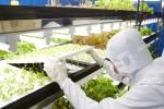 半導體管理技術 東芝用來種蔬菜