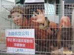 師大生裸身扮籠中猴 控法航殘酷載猴牟利