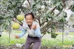 台南落葉造森林生態 「 寶柚」土地也美味