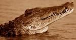 除了大炮、火星上還有「鱷魚」在曬日光浴?