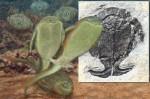 性交始祖找到了!古生物「跳舞」中交配