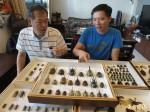 甲蟲達人謝志禎 收藏上千隻甲蟲標本