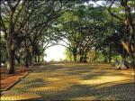 〈旅遊的滋味〉鐵馬遊巴西立公園