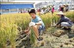最棒食育 東興童自然農法耕作收割