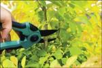 〈植物大觀園〉 綠色雕塑 修修樂
