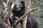 向陽死亡公熊 89年玉山國家公園標放