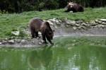 世上最長壽棕熊 35歲離世