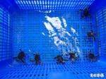 澎湖綠蠵龜產下空包蛋 疑與氣候異常有關