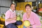 日籍女婿麻豆種柚 素人變達人