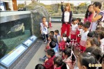 全校都是解說員 港子學童水族館開講
