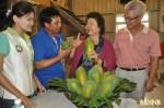 六龜木瓜名揚亞洲 陳菊允諾補助外銷冷藏設備