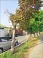 山海圳綠道樹又被毒 已死九棵