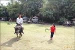 頂菜園重見水牛 學童搶當牧童