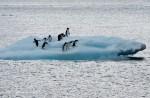 俄羅斯、中國阻饒 南極海洋保護區4度告吹