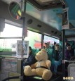 熊熊不見了!主題公車泰迪熊不翼而飛