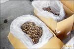 基隆海關 查獲700公斤走私香菇