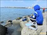 野生黑鯛貴 釣客用福壽螺誘上鉤