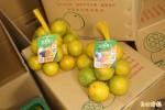 雲科大學生結合柳丁農 網路賣柳丁