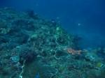 墾丁珊瑚價值40億 船帆石卻現大魚網