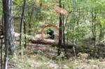 年輕人搶拍野生黑熊 下一秒慘遭攻擊死亡