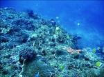 墾丁珊瑚價值40億 船帆石海域大漁網覬覦