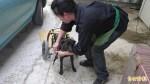 輪椅狗插競選旗惹議 飼主:別消費牠