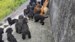 39隻狗遭集體棄養 髒如抹布堆