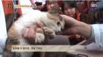 超萌貓咪受困水溝2個月 終於獲救