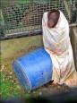 猩猩裹被禦寒 網路上瘋傳!